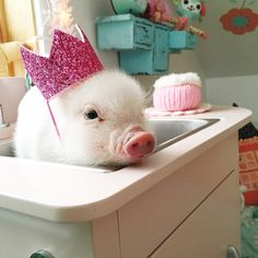 Pearl the pig