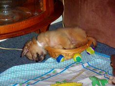 Lila's outgrown her bed.  Time for a new basket