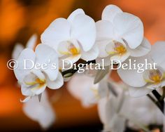 8x10 Delicate White Orchids Photo Print by DeesDigitalDelight, $20.00