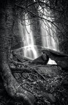 Tree At Falls In Black And White.  Monroe County, Tennessee