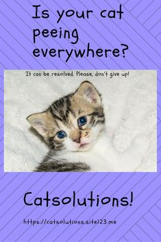 Cat peeing everywhere? Why cats do pee and poop outside the Litter Box? How to stop your cat urinating everywhere? Cat Peeing In House, Cat Urine Remover, Litter Box, Don't Give Up, Cat Toys, Carpet, Pets, Bed Couch, Animals