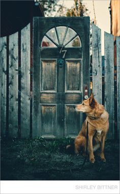 A rustic door leading to a secret garden? Photo by Shirley Bittner Photography.