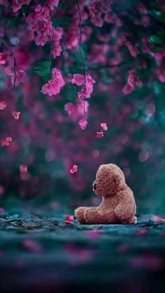 Alone Bear wallpaper – Cool backgrounds Black Flowers Wallpaper, Beautiful Nature Wallpaper, Teddy Bear Images, Teddy Bear Pictures, Cool Backgrounds, Wallpaper Backgrounds, Iphone Wallpaper, Teddy Bear Quotes, Alone Photography