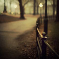 Central Park Fence in Fog, New York Photograph, Autumn, Fall, Night, Fine Art Photography, Black and Gold - Open Me Carefully