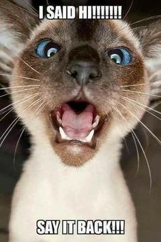 Funny pets are so surprised to hear what you have to say to them. Cute Animal Quotes, Funny Animal Memes, Cute Funny Animals, Cute Cats, Funny Cats, Animal Funnies, Animal Pics, Pet Shop, Siamese Cats