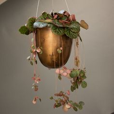 Cool Plants, Potted Plants, Garden Plants, Indoor Plants, Pink Plant, Hanging Pots, Green Life, Wabi Sabi, Plant Decor