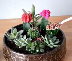 Add rocks on top of your succulent garden as a finishing touch.  Click through for more tips on creating a succulent garden. #indoorgardening