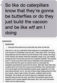 Do caterpillars know they will be butterflies?