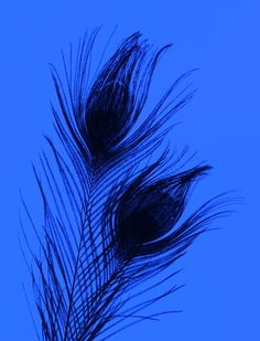 Feathers on Blue