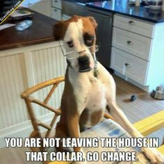 You Are Not Leaving The House In That Collar