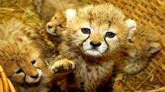 Really Cute Pictures Of Baby Animals - Widescreen HD Wallpapers