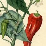You searched for botanical - Page 2 of 10 - The Graphics Fairy