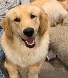 Leo #3172 is adored by his forever family! To read more about Leo's second chance, please click on the link. #secondchancesunday #goldenretriever #rescuedog #adoptdontshop Rescue Dogs, Leo, Adoption, Foster Care Adoption, Lion