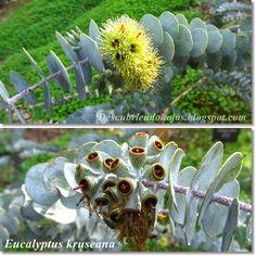 Descubriendo hojas: Jardín Botánico de Barcelona (primera parte)