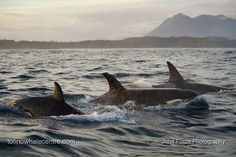 T64s in Clayoquot Sound Sept. 1, 2014