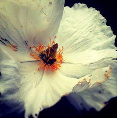 Flowers by justinablakeney, via Flickr