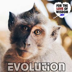 Evolution by natural selection is a very simple idea that explains so much. Natural Selection, Evolution, About Me Blog, Articles, Wisdom, Simple