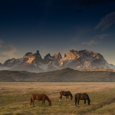 Patagonia - null