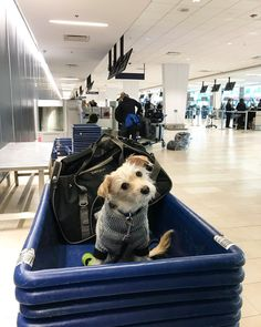Is my luggage over weight? Heading black home to Vancouver where it should feel like the Bahamas compared to the east coast