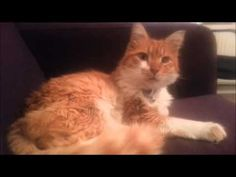 Smudge the cat on the sofa