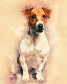 Jack Russell Terrier Dog Canvas Art Print Animal Art Poster