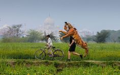 Paul Goldstein, an Exodus safari guide, has been training near the Taj Mahal for a punishing week-long charity challenge that will see him run the Brighton marathon, make his way to London on foot, then run the London marathon - all wearing his ten-foot tiger suit on his back. He has already climbed Kilimanjaro in his tiger top. Paul is passionately outspoken on the plight of the tigers and believes pity for them is fine, but more action is needed to stop poachers.