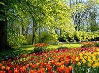 Spring Flowers Trees