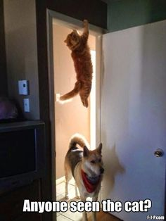 visit www.amazingdogtales.com for the best funny dog joke pics,inspirational dog stories and dog news.... Funny Dog Chasing Cat Hiding Meme