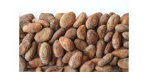 Prírodné kakaové bôby nepražené, 17ks, 20g, Vanilkový obchod