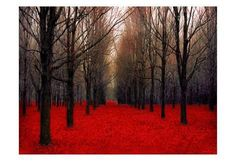 Autumn photograph, Red forest fine art photography print, Dark Red Home Decor for Halloween, Fall colors, wall art Forest Photography, Fine Art Photography, Poppy Photography, Landscape Photography, Photography Flowers, Paris Photography, Canadian Forest, Canadian Maple, Grand Art Mural