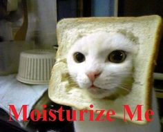 HAHA!! (This in-bread cat wants to be Cassandra!!) XD