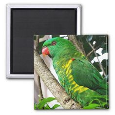 Scaly Breasted Lorikeet 2 Inch Square Magnet