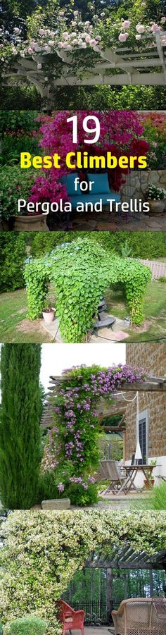 Checkout 19 best pergola plants for your garden. These climbing plants for pergolas and arbors can also be grown in small gardens easily. #LandscapingIdeas