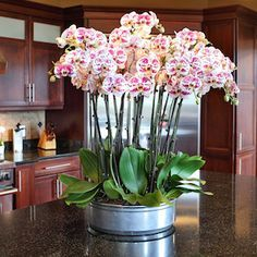 The more orchids the merrier! Learn how to keep several orchids in one planter without jeopardizing their health.
