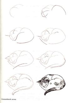 How to draw a cat by Anke Karkutt
