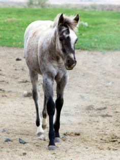 KT Gun in a Million was born May 23, 2014 and is a filly by KT Gunpowder N Lead and out of Wright on Sugarnic, \