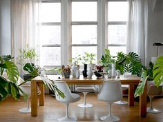 Plants and greenery your interior design indoor apartment ideas full shade variegated philodendron plant Modern Country, Home Decor Bedroom, Living Room Decor, Dining Room, Garden Ideas To Make, Interior Design Plants, Ideas Vintage, Ikea, Art Deco