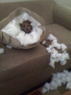 I'm furry.... no, wait....fluffy.