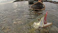Prøv lykken etter sjøøøreten. Frisk luft og sprek fisk er en god kombinasjon. Frisk, God, Cold, Dios, The Lord