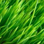 Do not let your grass grow very tall. As early as you can, tend to them. If you don't have time, then hire a professional lawn care provider. Check out http://www.rdslawncare.com/ for more info.