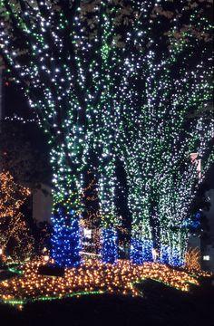 christmas lights | christmas_lights.jpg | 1962x3000 (1403kB)
