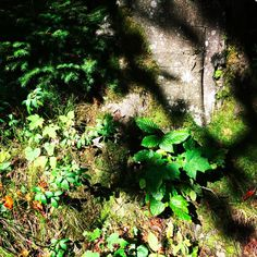 green woods in the sunlight. Zell am See, Austria. photographed by Christina, von ERIKA.