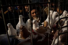 Silk Road Market Caters to Lovers of Acceleration, Handling and Plumage - Description of a pigeon market in Kashgar and why it's a popular hobby among Uighur men; article in The New York Times..