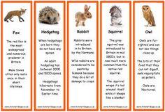 Great site for our British wildlife topic! Animal Activities, Preschool Activities, Wildlife Week, Scottish Animals, School Site, Nocturnal Animals, Forest Theme, British Wildlife, Environmental Education