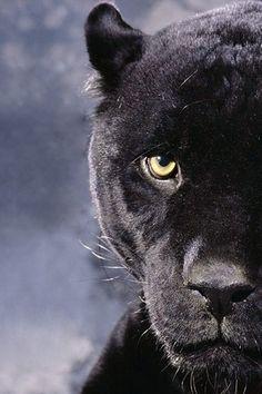 Blatant Black Panther