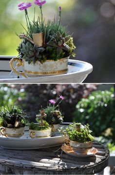 tea cup mini garden w succulents Dream Garden, Garden Art, Garden Plants, Indoor Plants, House Plants, Garden Design, Garden Kids, Fairies Garden, Fairy Gardens