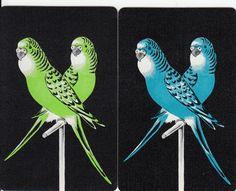 Vintage Swap Playing Cards 1 Pair Beautiful Budgies on Black   eBay