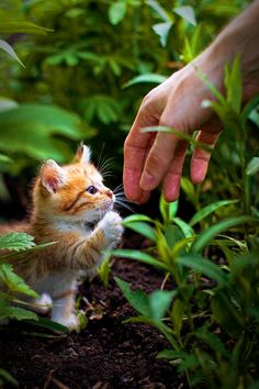 Adorable cute and sweet little kitty try to hand shake