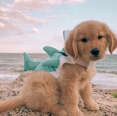 Super Cute Puppies, Cute Baby Dogs, Cute Little Puppies, Super Cute Animals, Cute Little Animals, Cute Funny Animals, Cute Puppy Pics, Funny Dogs, Baby Animals Pictures