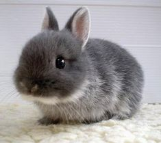 Words cannot express just how cute baby bunnies are.  Dare I say, even cuter than puppies???